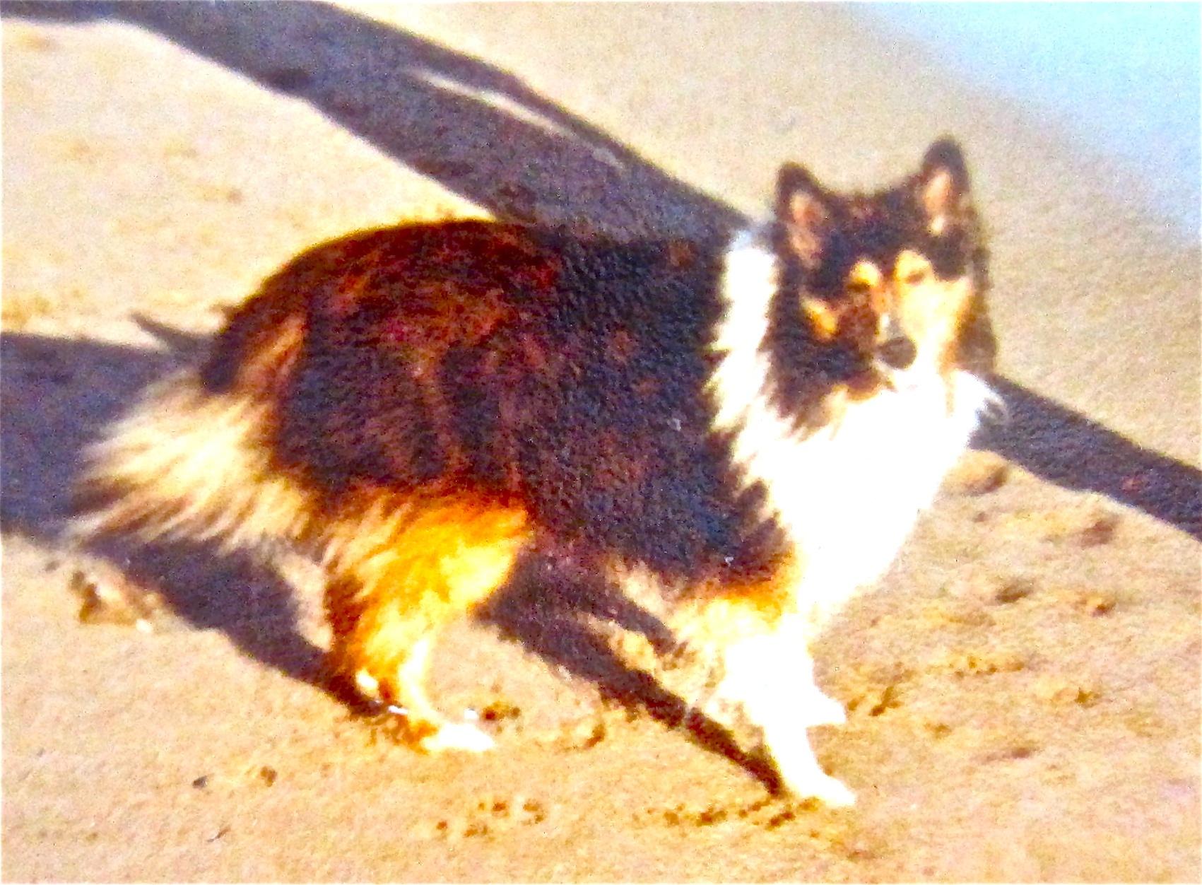 carlotta in Malibu