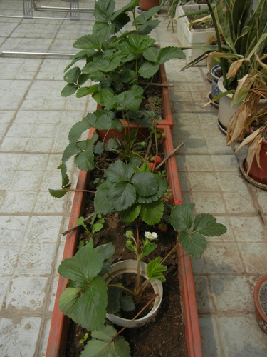 Rooftop Vegetable Garden _ 9867