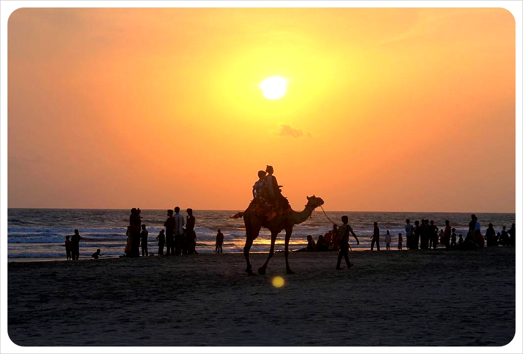 kannur camel at sunset