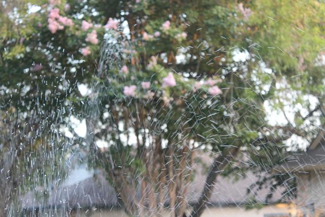 sprinkler.