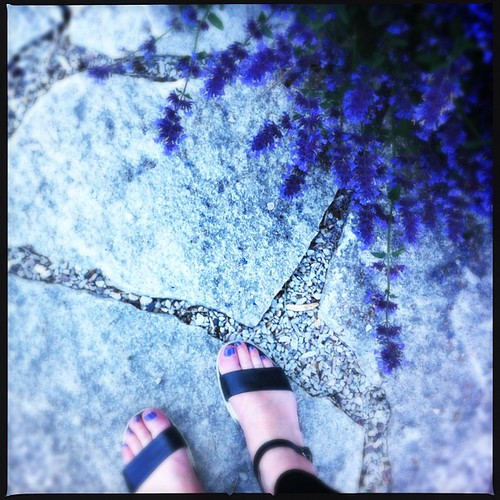 Blue Day #instagood #instamood #iphoneonly #hipstamatic #flowers #beautiful #dreamy