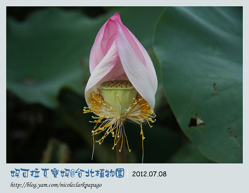台北植物園4