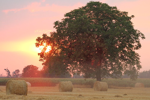 light sunset summer sunlight colors fog backlight dawn countryside warm day mood sommer farming relaxing athmosphere jomaot