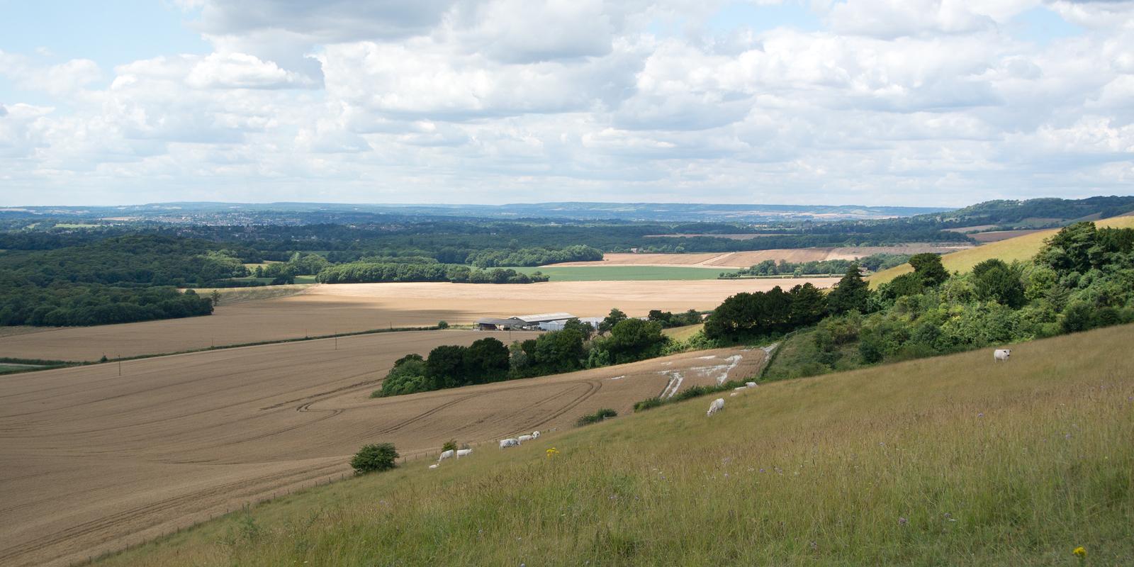 North Downs Way Hollingbourne Circular via Hucking