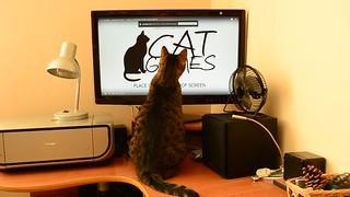 [Video] Crazy cat again :-)