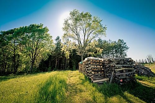 Holz vorm Wald