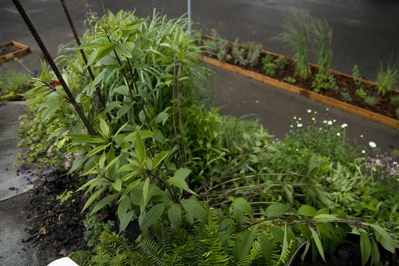 Rhone street gardens: with a sudden gust...