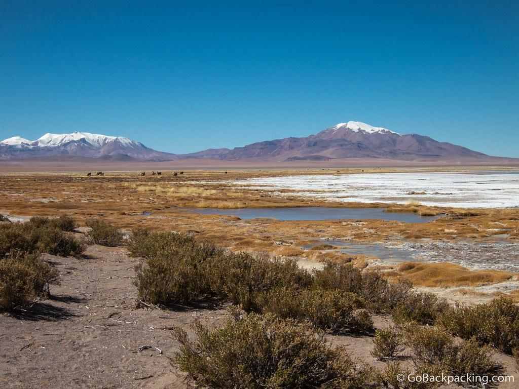Our first view of Salar de Tara (the Tara salt flats).