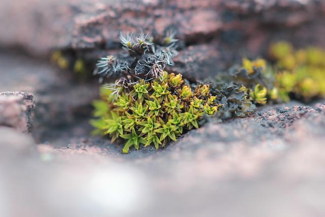 moss-scapes & lichen-scapes