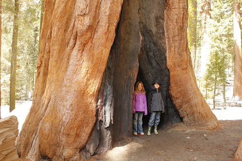 The Kids Stand in a Sequoia Fire Scar