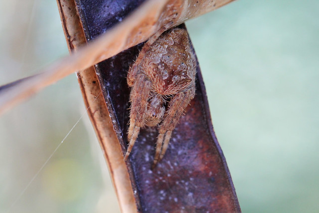Hideaway spider