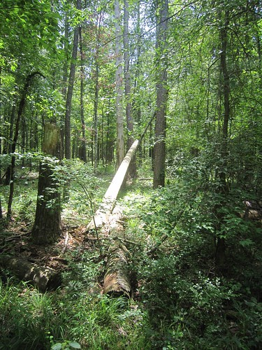mississippi unitedstates 2012 smithcounty bienvillenationalforest untedstatesforestservice marathonrecreationarea