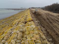 大潭電廠突堤效應所蓋的堤防,讓藻礁逐漸死亡。(攝影:劉靜榆)