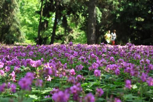 Ogród botaniczny w Poznaniu / Botanical garden, Poznan
