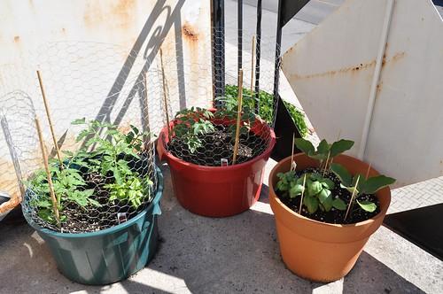 tomatoes, eggplant, basil