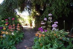 Eden Shade Garden