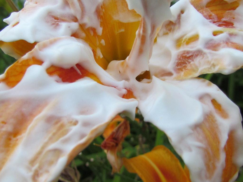 flower creampie