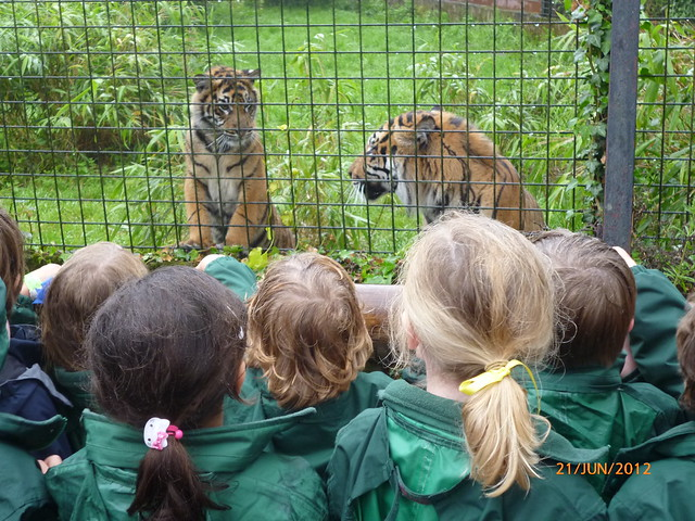a trip to the zoo essay Narrative: a trip to the zoo and the affects of natural creation topics: north carolina zoo narrative essay of a trip to new yorkit was march 13, 2003 and.