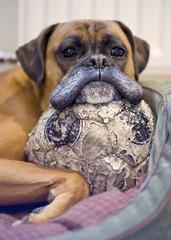 Cheeky Chops Dog Grooming
