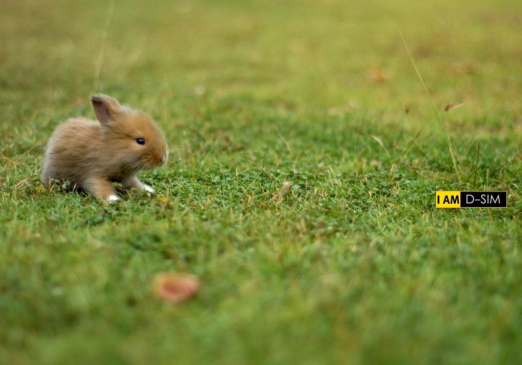 Baby Rabbit (7)