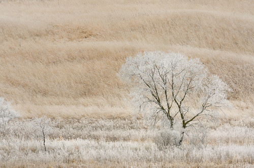 The Tree Frosty_5802.jpg