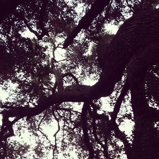 Under a sacred oak, restoring my soul