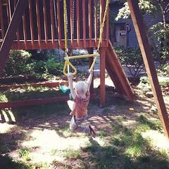 flower(0.0), hammock(0.0), backyard(1.0), outdoor play equipment(1.0), play(1.0), swing(1.0), playground(1.0),