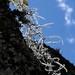 Aerófitas - Backlit aerophytes; área por Río Blanca al noroeste de Santo Domingo Yanhuitlán, Región Mixteca, Oaxaca, Mexico por Lon&Queta