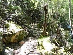 Le vieux sentier en RD en aval de la brèche du Carciara