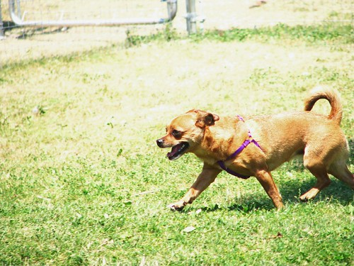 Gracie runs free
