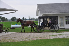farm(1.0), amish(1.0), vehicle(1.0), transport(1.0), horse(1.0), horse and buggy(1.0), carriage(1.0), rural area(1.0),