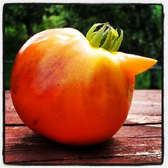 My horny tomato ripened! #containergarden #food #deck #summer #salad