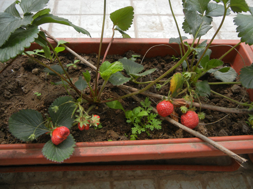 Rooftop Vegetable Garden _ 9869