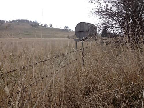 Long Grass near Bathurst photo