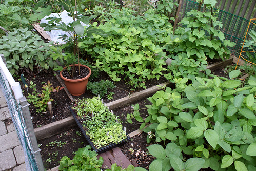 side garden 020