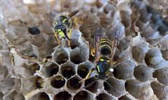 Inside the Wasps Nest
