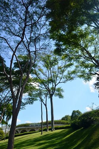 Bosque no Solo Sagrado