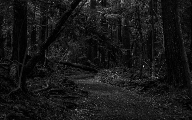 Aokigahara, Forest of Death