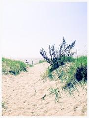 Sand Dunes in Pärnu, Estonia