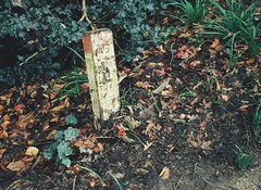 Decrepit wooden post among dead leaves and weeds