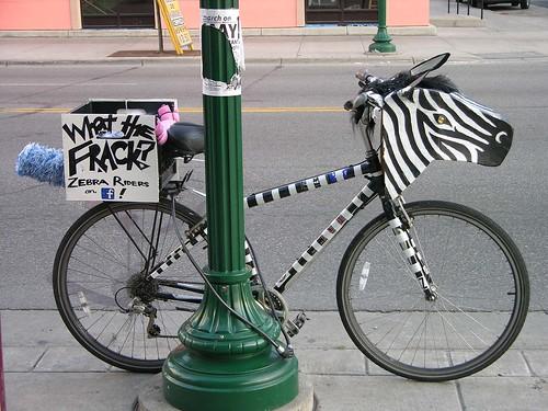 MayDay 2012 zebra riders