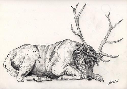 elk by www.sandradieckmann.com