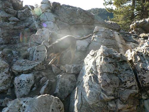 Rock Dog, Sheep Camp