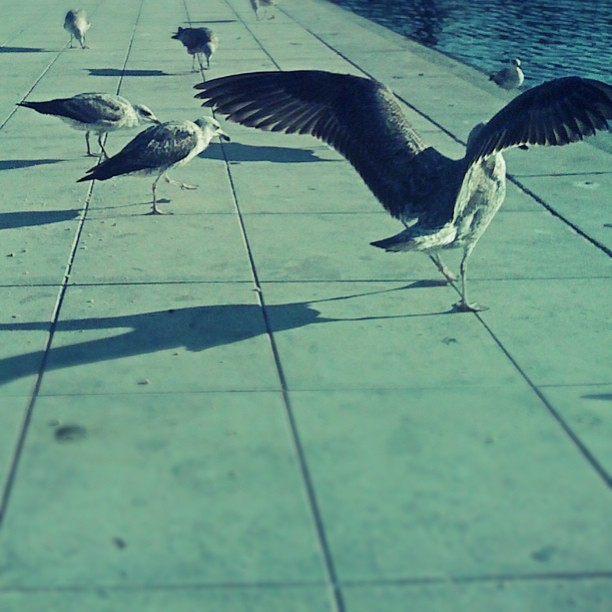 Day 27 - Somewhere you went #photoadayapril feeding #seagull #Aveiro #p3top