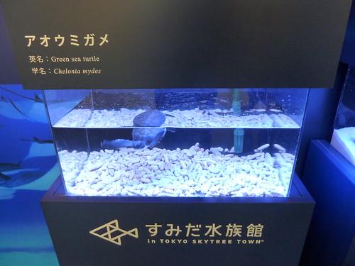 すみだ水族館 アオウミガメ in 松屋銀座