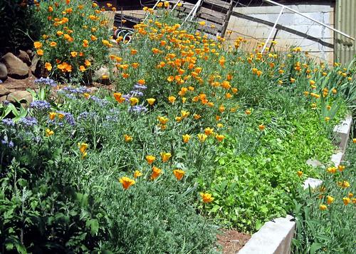 more garden pics_02