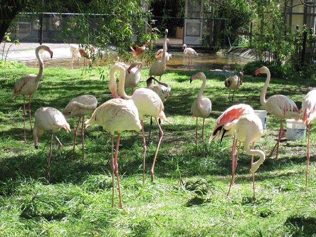 djurpark05