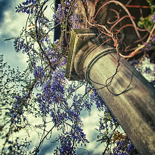 The Wisteria Column