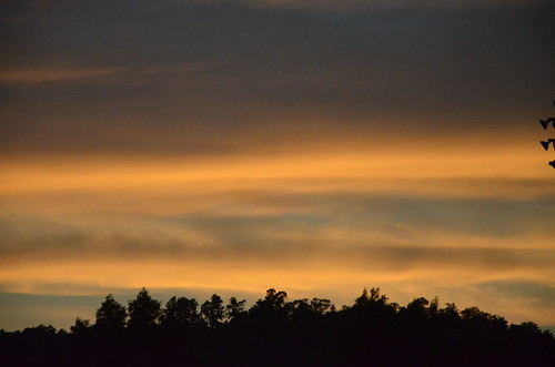 sunset clouds treeline