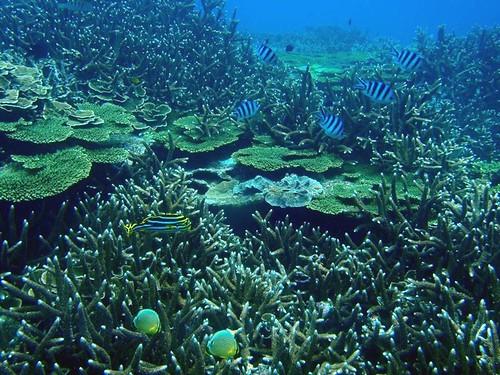 澎湖南方四島海域豐富的珊瑚礁生態。(圖片來源:海管處)